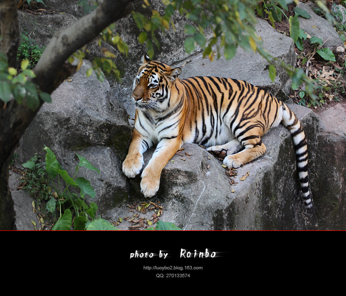 视觉:广州动物园 -     露枫 - Rainbos Road