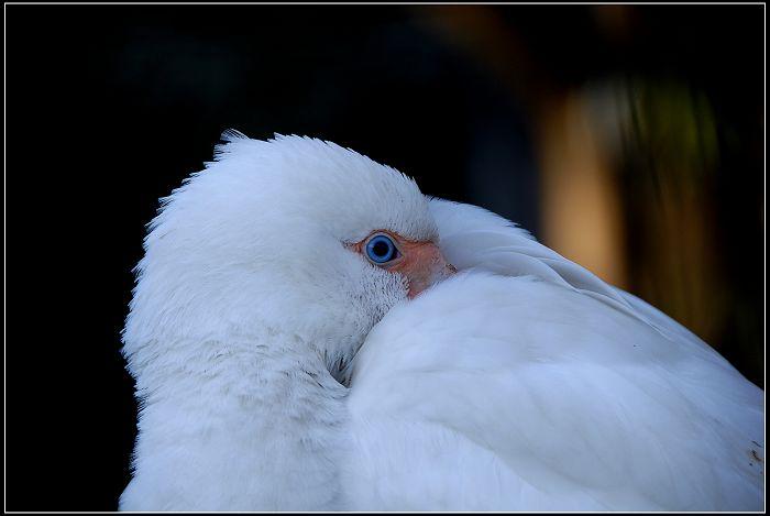 原创摄影-离失家园的鸟 - 桃花公子 - 徒步夜行者
