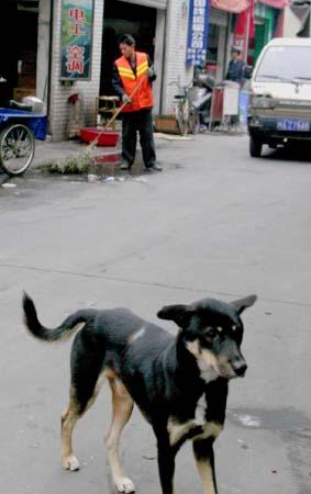 狗与狗,人与人 - 蔡骏 - 蔡骏的博客
