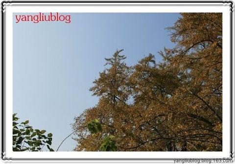 秋色 - 杨柳 - 杨柳的博客