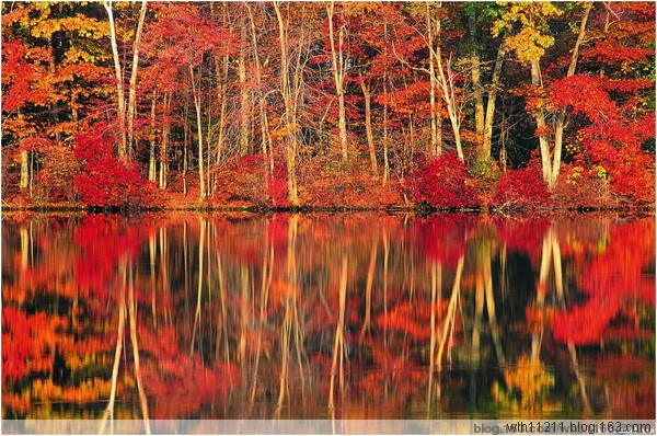 诗:我  愿 - 红枫 - 红枫的博客