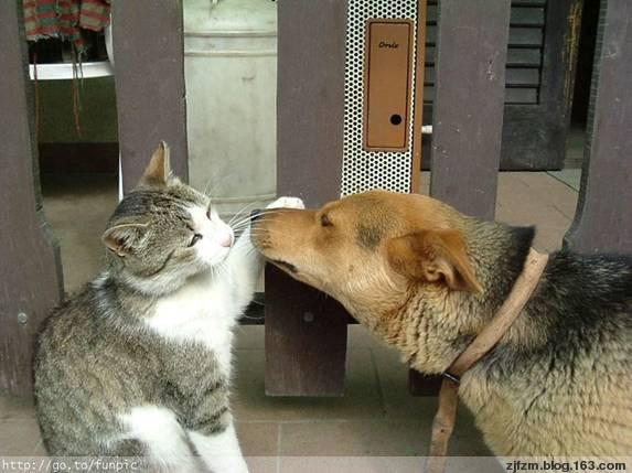 猫 - 我心永恒 - 我心永恒在此用心耕耘抒写人生轨迹