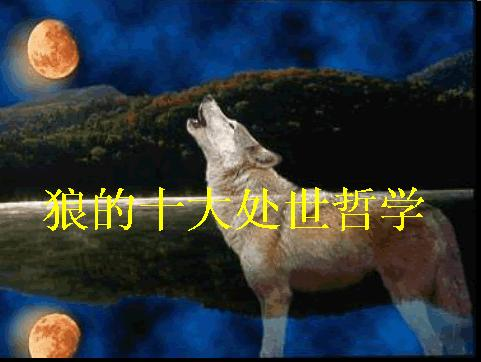 狼的哲学 - 天使♂之羽 - 》》》阿三