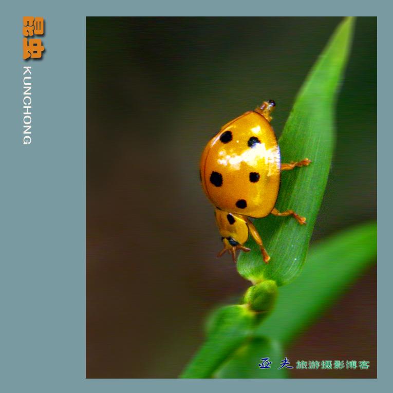 (原摄)形形色色的昆虫之二 - 高山长风 - 亚夫旅游摄影博客