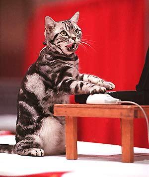 张大帅的脸真是猫抓的 - 娄义华 - 娄义华的作品空间