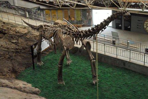 图文:1831个恐龙足印留下的谜团 - 赵亚辉 - 赵亚辉