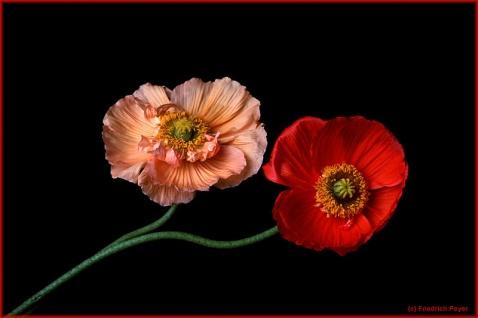 博客鲜花背景图片素材 (1)  - 芳芷香惠 - 芳芷香蕙欢迎你