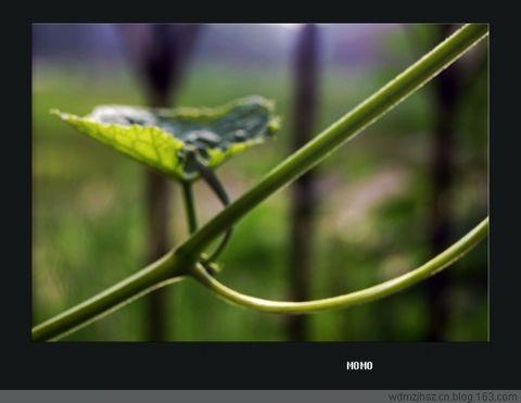 [原创]--- 绿色 - MOMO - MOMO 的博客