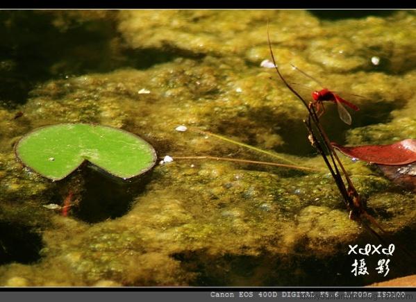 【xixi纪事】动物园疲惫的拍摄 - xixi - 老孟(xixi)旅游摄影博客