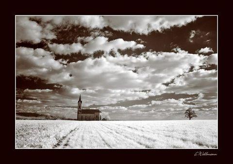 唯美奇异的红外摄影世界 - 玫瑰小手 - 陶然亭