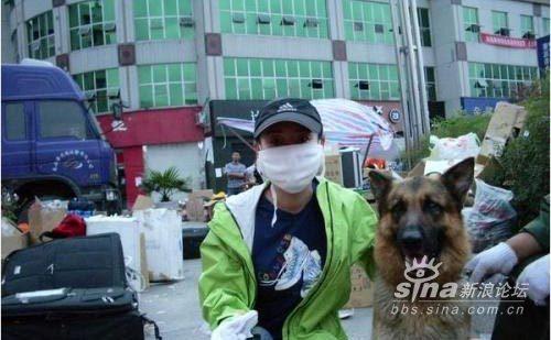 不会说话的天使—— 四川地震搜救犬 - 土妹 - 土妹
