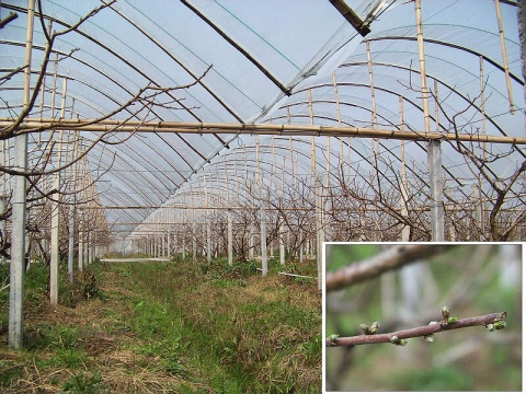 走访全市果树生产基地 - 清扬 - 花果飘香