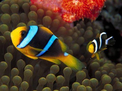 海和鱼 - 憨憨 - 寻春