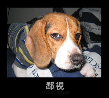 【转载】可笑的动物表情 - ksw13862865411 - 乐乐梦想多多