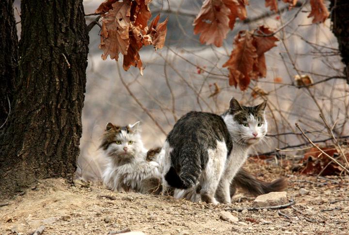 (原创摄影)猫片 - 刘炜大老虎 - liuwei77997的博客