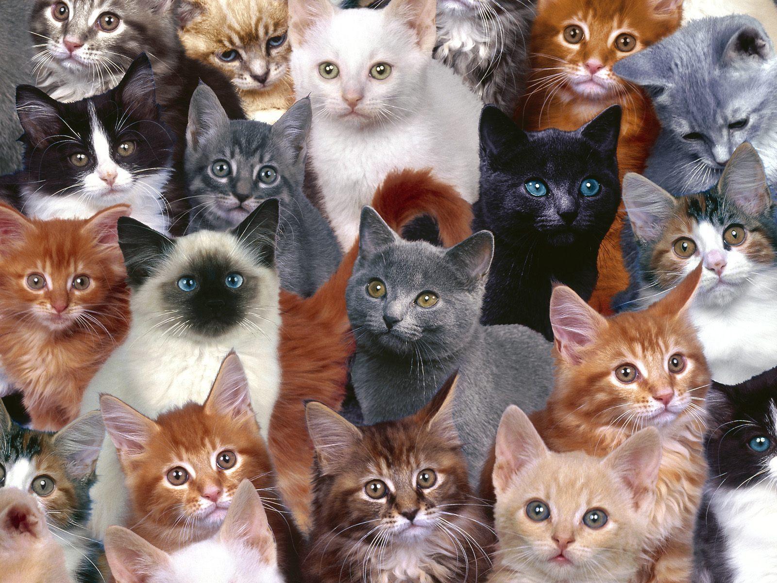【图片欣赏】可爱的猫儿 - 静中有动 - 静中有动的休闲屋
