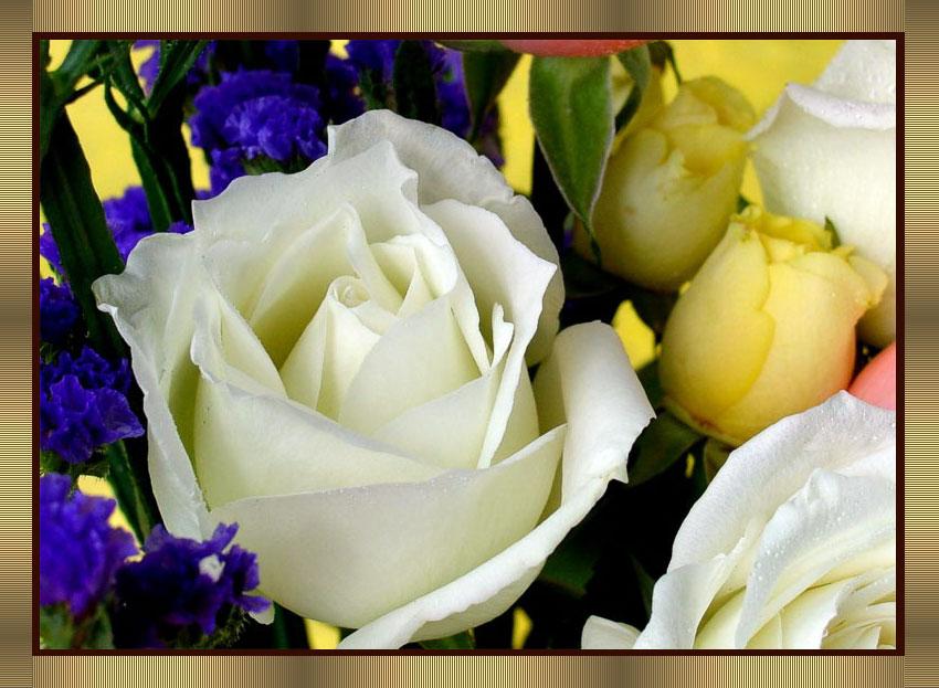 引用   ﹝沧海作品﹞鲜花送给屏前的你﹙之二﹚ - 钓者心语 - 杨连松的博客