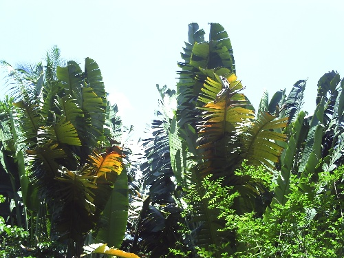 海南之旅--兴隆 - 田野 - 绿色之美