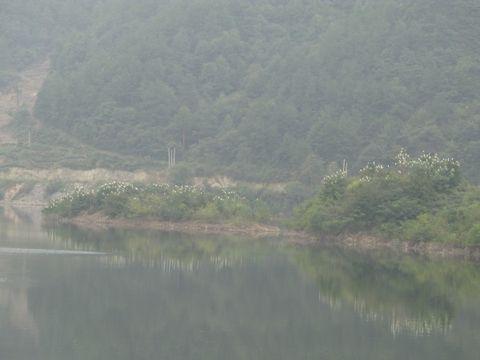 鹭群(照片) - 江村一老头 - 江村一老头的茅草屋