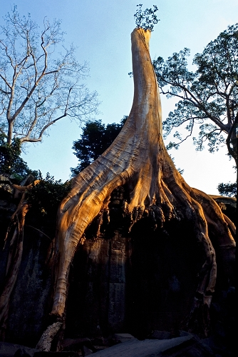 丛林中的王国 - Y哥。尘缘 - 心的漂泊-Y哥37国行
