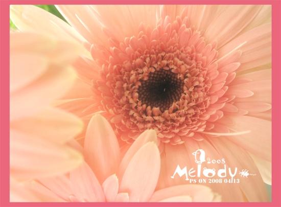 非洲菊 - melody.dd - 华丽的D调