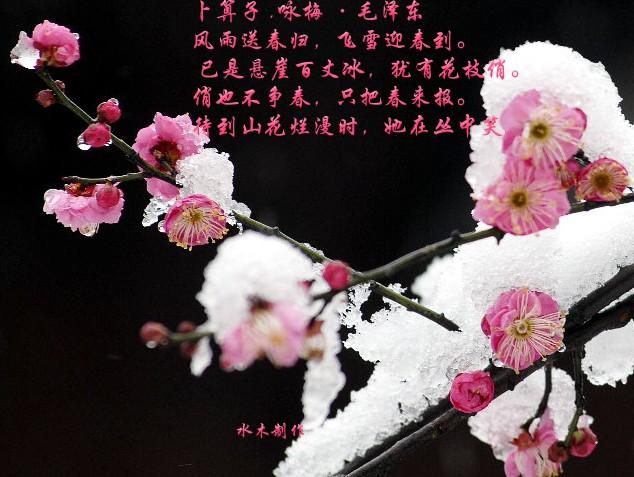 傲雪寒梅为君开 - 。.| ↙`蕶誶哋、庝。ゞ☆ - 蕶誶哋、庝。   博客