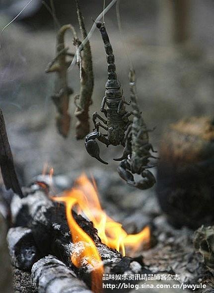 野外生存训练:士兵吃蝎子喝蛇血(组图) - zhenyan - zhenyan5858 的博客