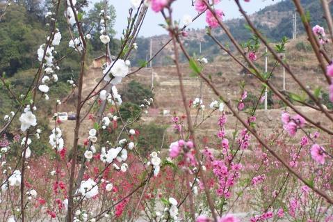 奎峰观鸟,北溪赏花 - 老陶 - 行走时光
