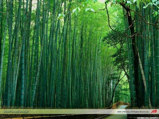 竹林风景 - 海阔天空 - 迎友松 祝每个来访朋友幸福快乐