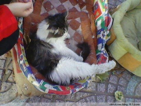 猫仔好靓啊TAT - rloveyuu - 门吱悠一声打开…