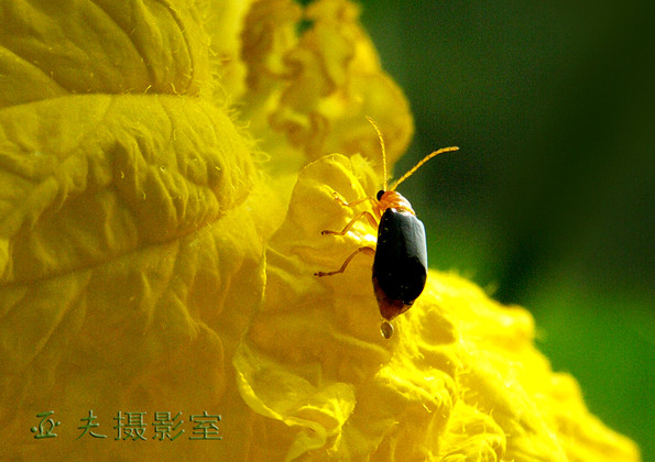 (原创)菜园昆虫之一 - 高山长风 - 亚夫旅游摄影博客