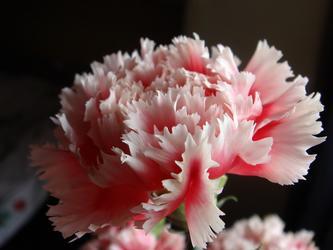 春暖花开,百鸟争鸣(视频三)