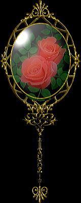 玫瑰花分割线 - 逆风飞扬 - 茶园园主