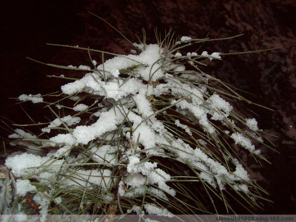 【原创】2008年的第一场雪 - 晓苏 - 晓苏——菜鸟'女侠'的博客