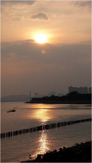 [原]深圳·红树林海岸 - Tarzan - 走过大地
