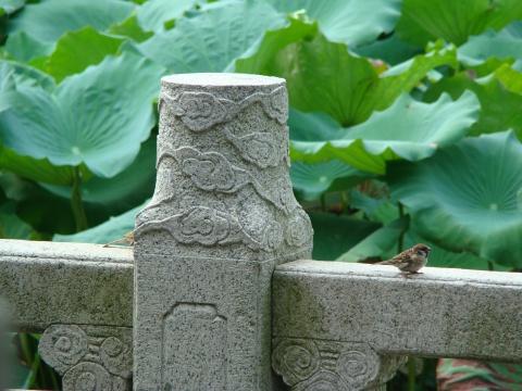 [原创]古刹里的温柔和雄伟 - 猫咪 - [我的原创]猫咪爱之巢
