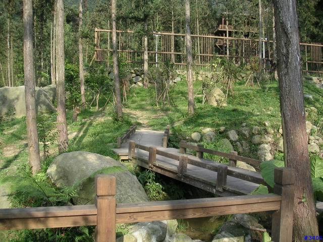 ...…   保留校地原始杉树林遍布之风貌.   篮球场和网球场
