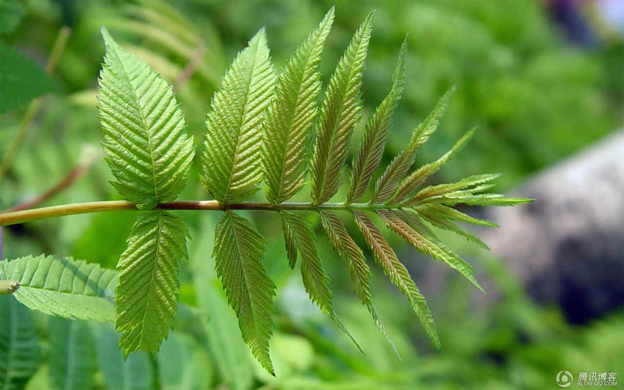 来几张绿油油香喷喷的照片 - aaqq-1232 - 宝君2009