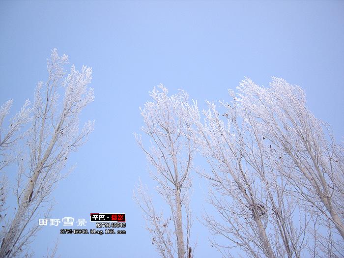 〖摄影〗田野雪景(40P) - 辛巴 - 【辛巴】