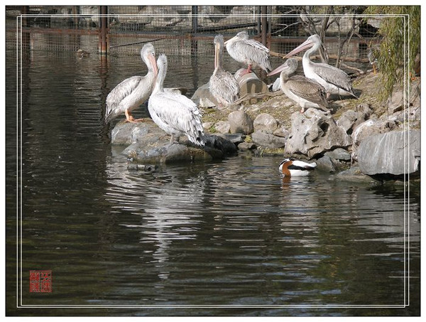 初冬的动物园一角《原创摄影》 - 五味杂陈 - 我的人生驿站