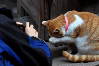 猫咪照相也收费