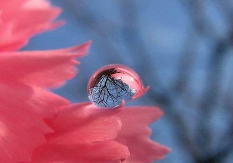 摄影精品~美妙一瞬间 - 玫瑰小手 - 陶然亭