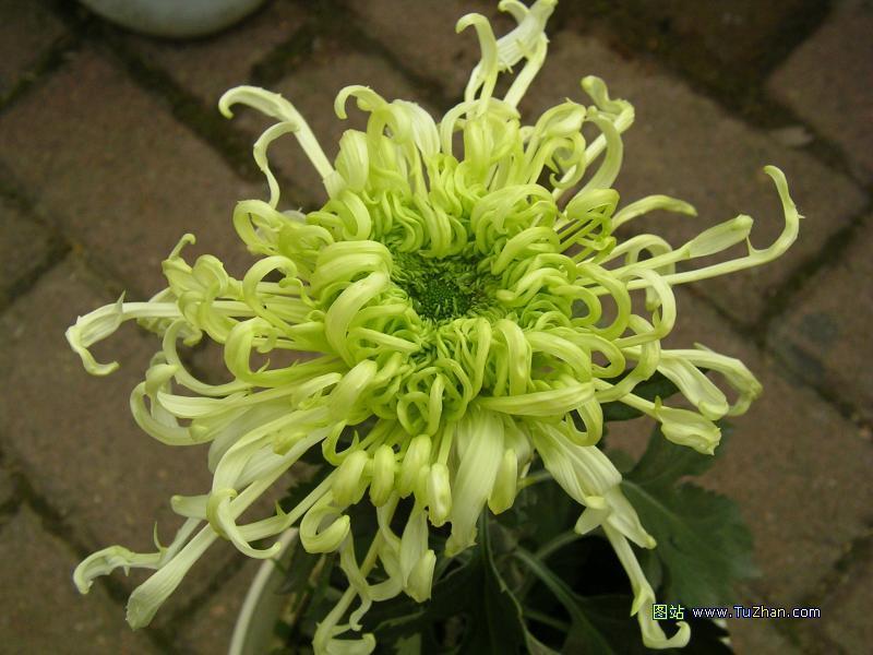 十大名花欣赏 - 笑然 - xiaoran321456 的博客