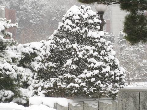 雪 - zmyecho - 阿左的泡菜生活