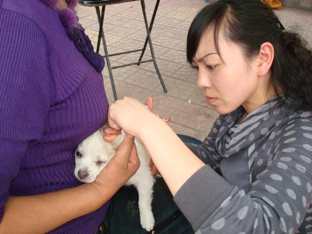 2010.4.29再次去杨家岩社区、广元煤矿宣传文明养犬免费注射疫苗 - 广元市博爱动物保护中心 - 广元市博爱动物保护中心