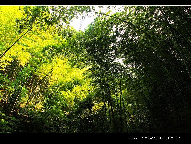 [原创]放飞心情-蜀国之旅(3):蜀南竹韵篇 - 流浪的风 - 流浪的风之驿站