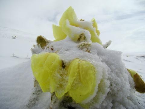 七月 玉树的格桑花雪中怒放 - 卓巴 - 尕多觉卧的寻梦缘