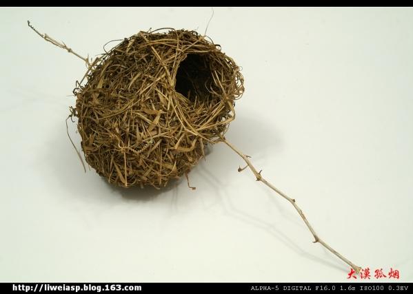 【摄影】沙特风情---鸟巢 - 大漠孤烟 - 大漠孤烟的博客