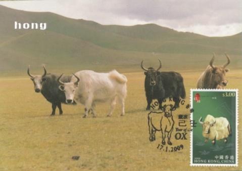 新年牵回几头牛 - 老焉 - 老焉的博客