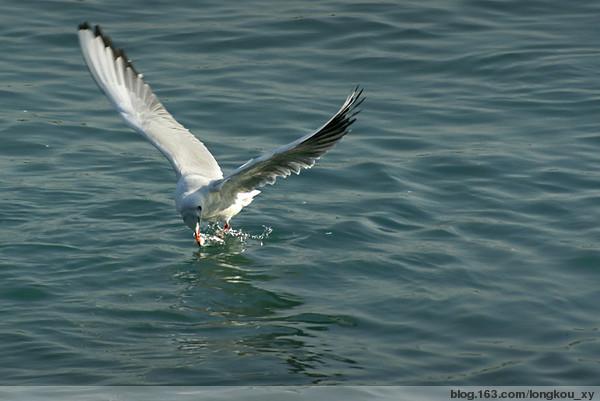 海燕之歌——高尔基 - 红枫 - 红枫的博客